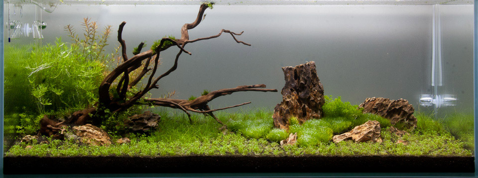 300l aquascape